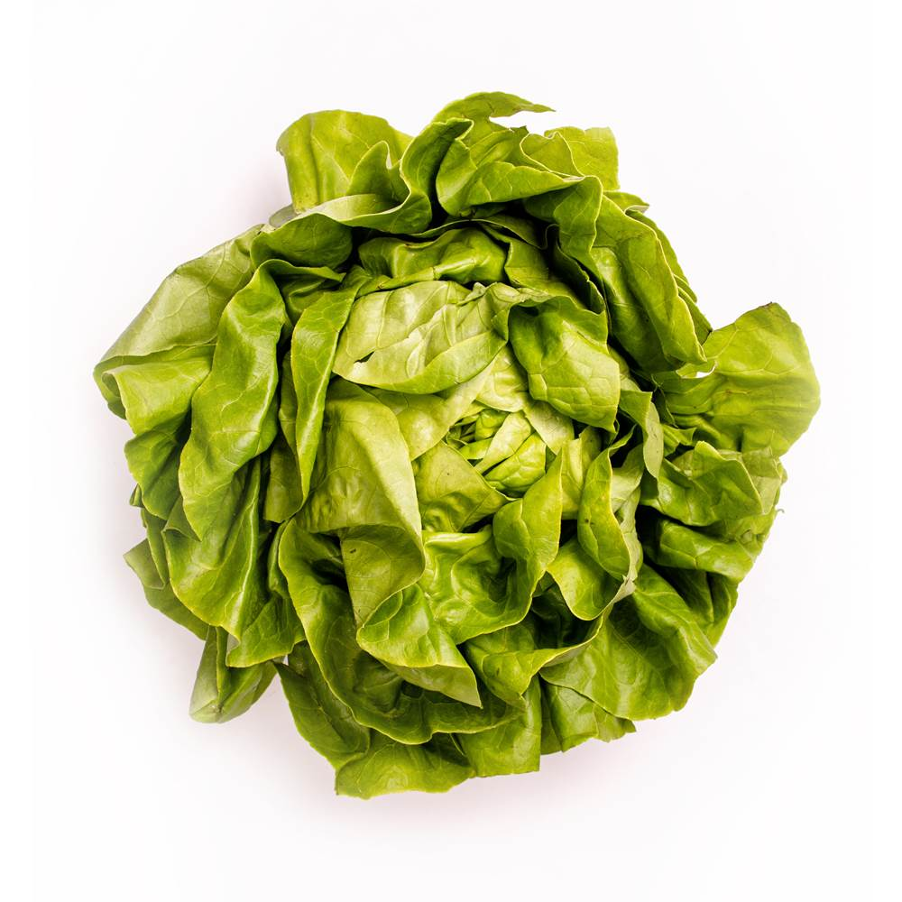 Kopfsalat frisch
